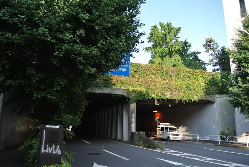 もしゃもしゃグリーンのトンネルをくぐって・・・