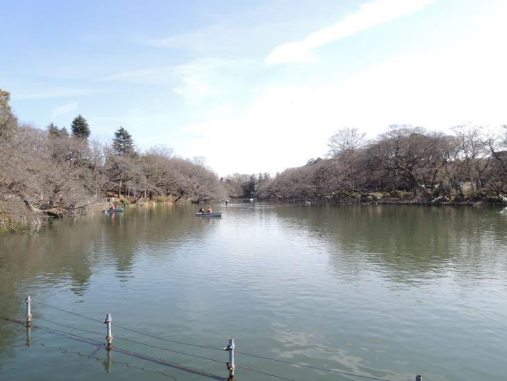 春が待ち遠しい桜サイドの井の頭池