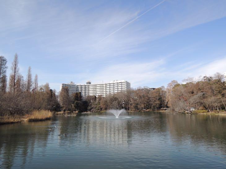 桜とは逆サイドの井の頭池