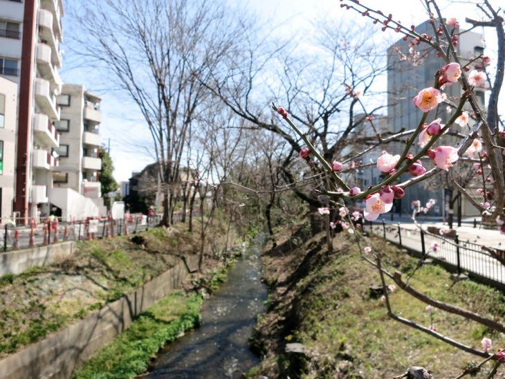 """玉川上水 """"風の散歩道"""""""