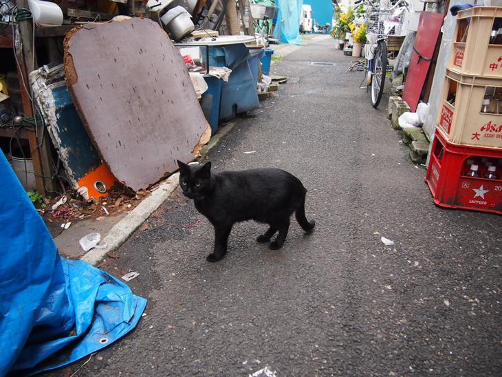 眉目秀麗な黒猫。 首輪がなければ連れて帰ってたかもしれません。。笑