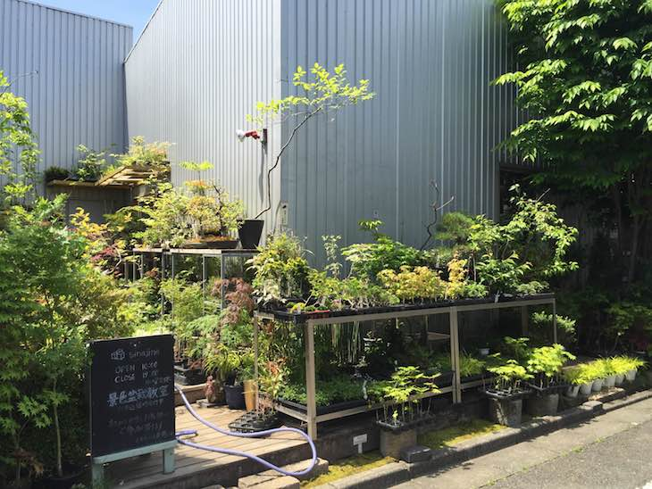 景色盆栽のお店