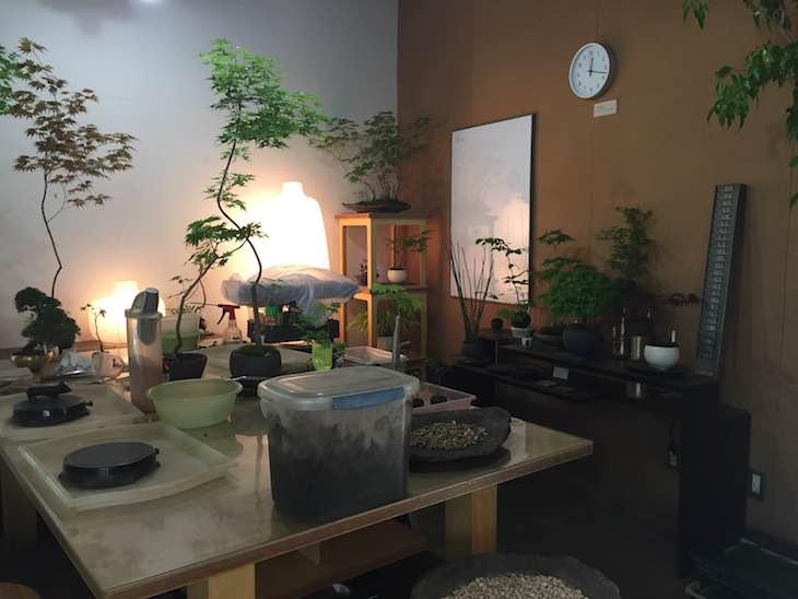 盆栽教室なんかも。