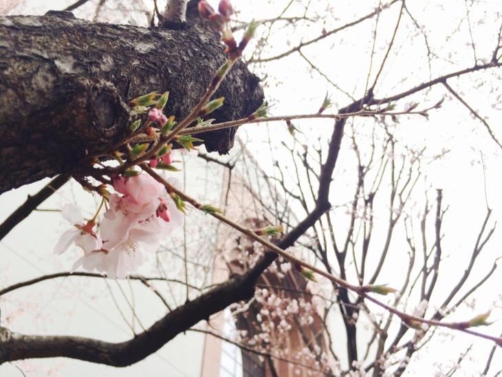ちいさい春みつけました。