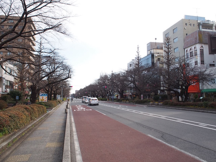駅前から一直線に伸びる大学通り。春には桜並木となり、美しいのです。