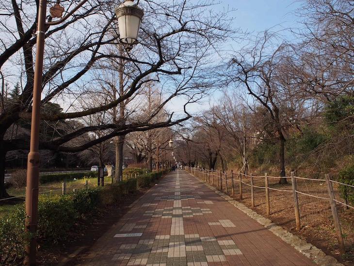 大学通りを歩くと落ち着くのです。