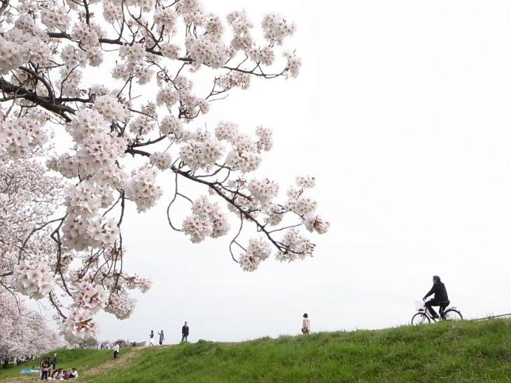 平日ながら、お花見をする人々がたくさんいました。