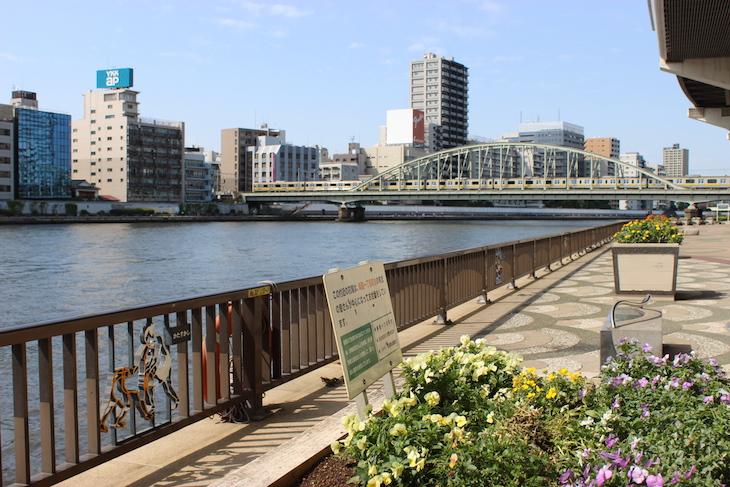 隅田川テラス。散歩コースであり、ランニングコース