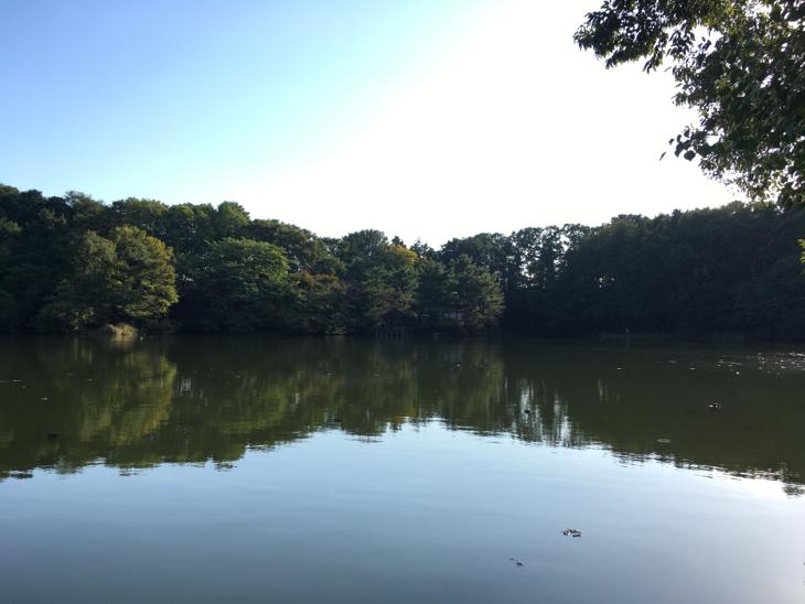三宝寺池。晴れててよかった。