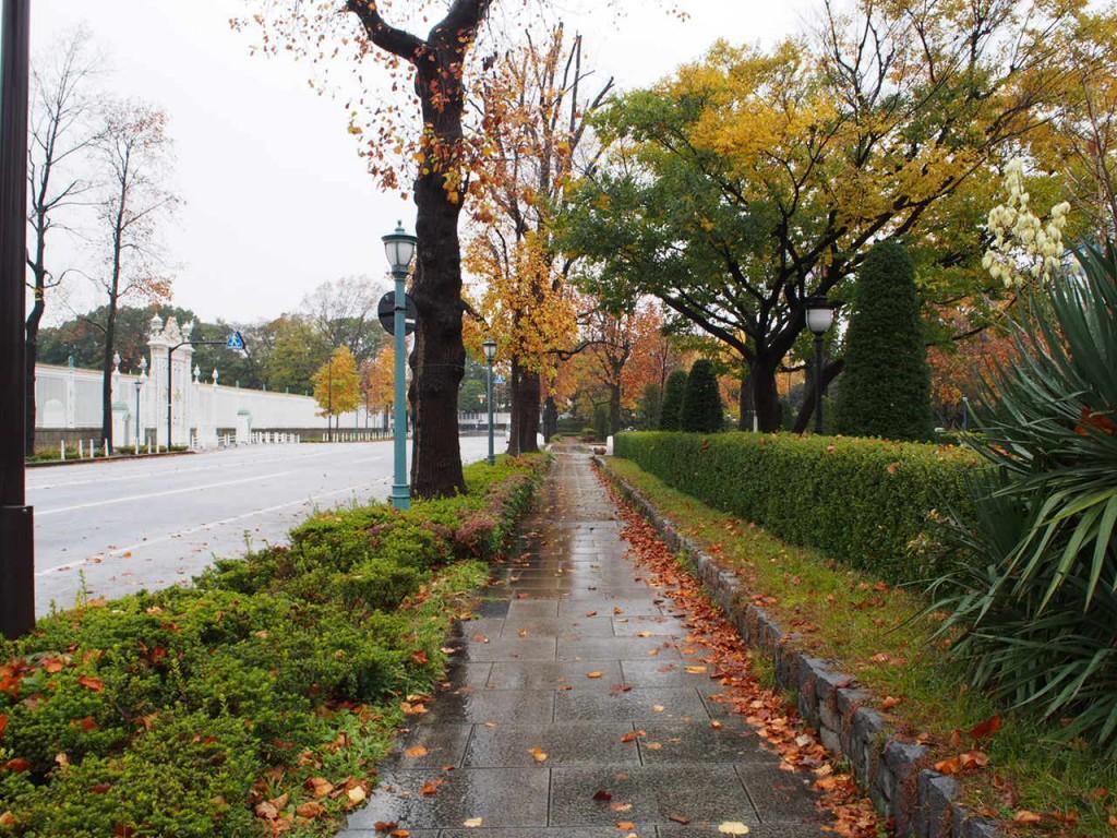 綺麗な紅葉の道を歩く