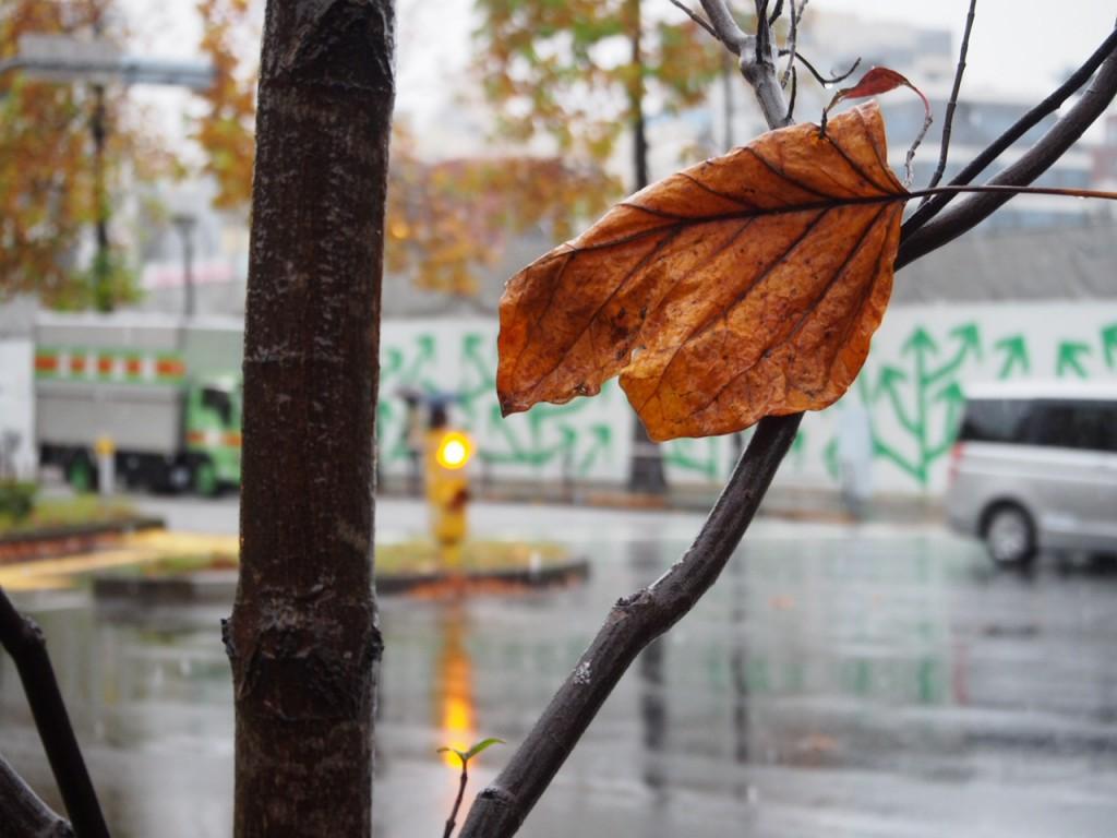 秋を感じますね