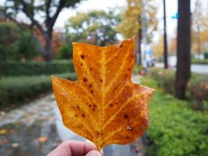 秋が落ちていました。