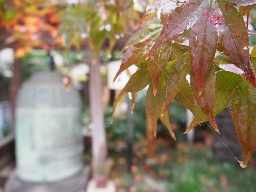 雪解け水をまさか秋と一緒に体験するとは・・・。