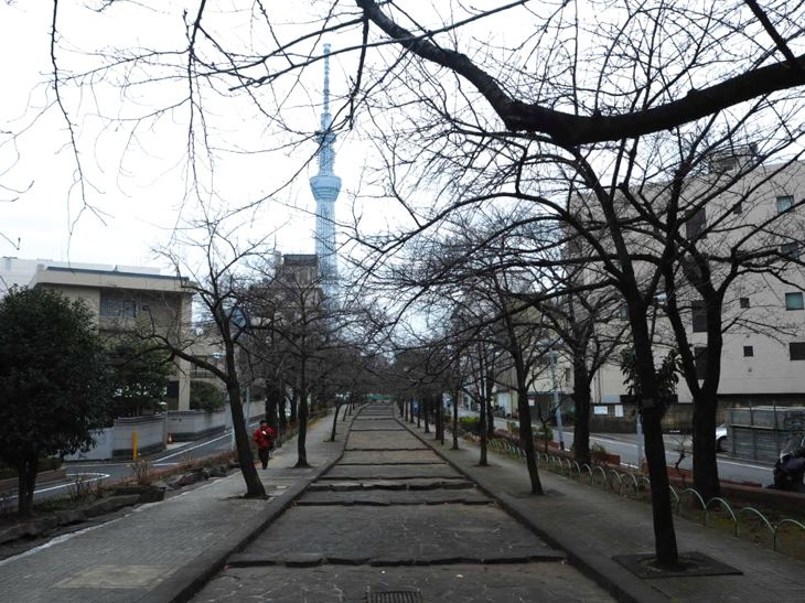 あいにくの曇り空。春には桜のトンネルが。