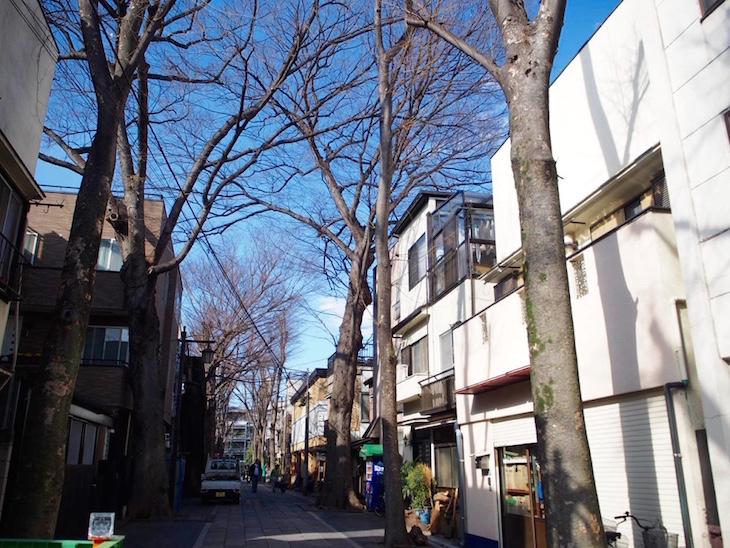樹齢400年の欅の木、雰囲気ありました