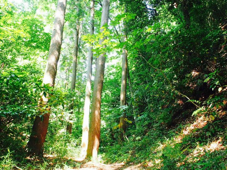 一生分の森林浴をした気分。