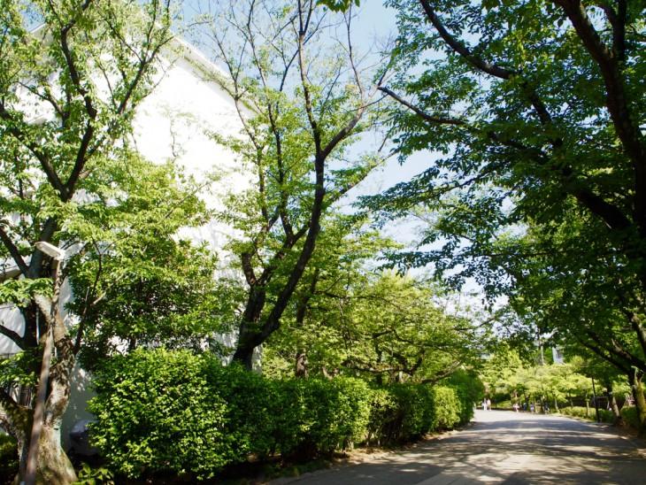 駅から続く緑道。