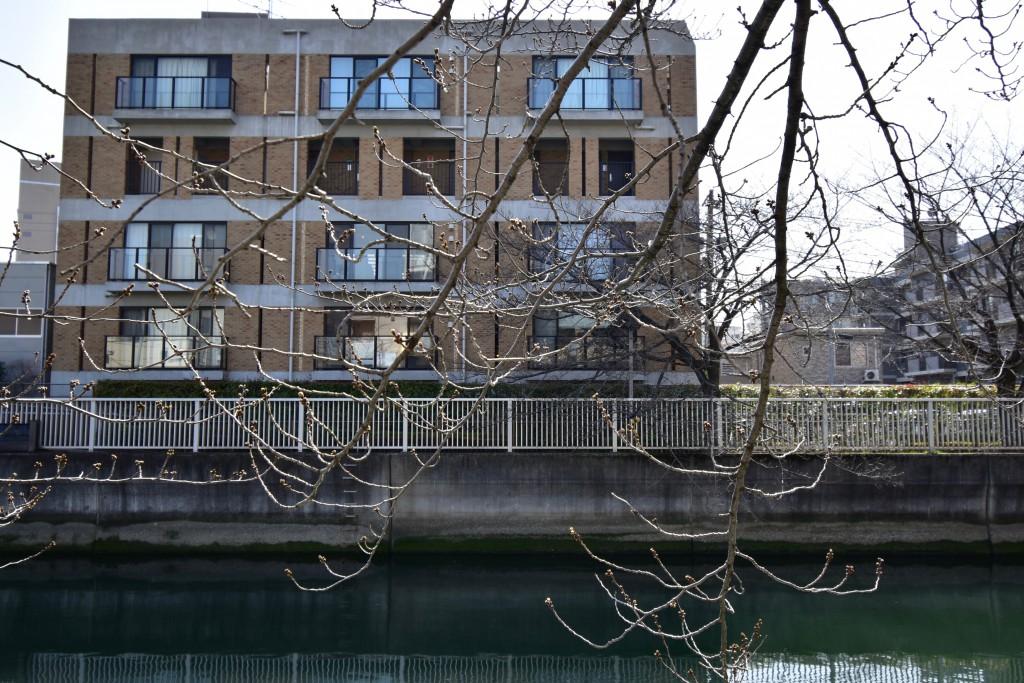 春以外にも、緑と川とこの街を春夏秋冬楽しめるリバーサイドの物件。