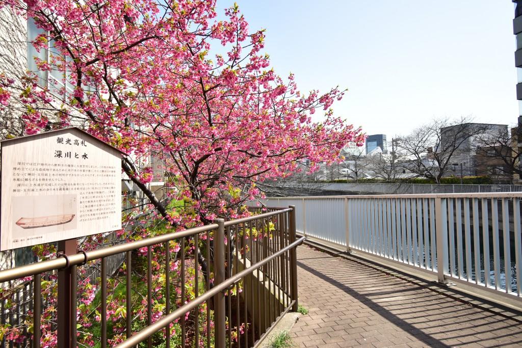少し早い桜が咲いていました