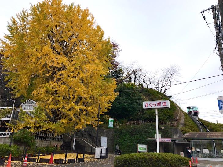今の時期だと紅葉はもう落ちてしまっていますが…。