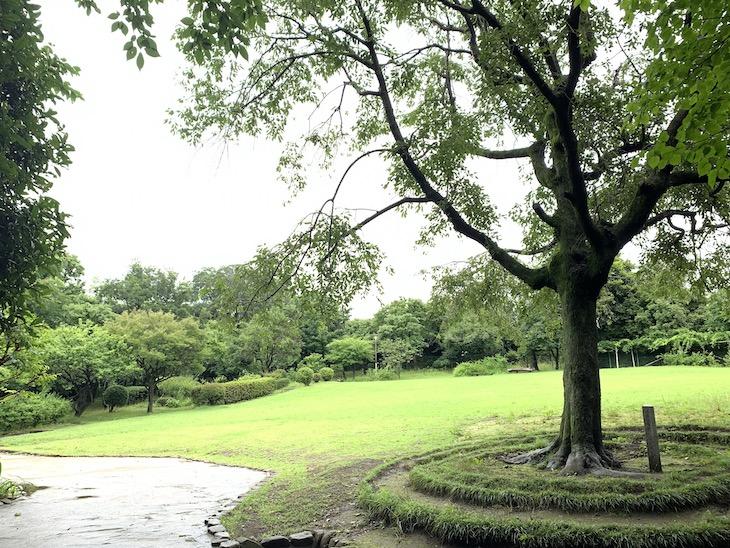 雨なので公園独り占め!晴れの日は富士山が見えるそう。