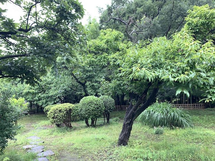 栗林の奥には竹林。木の種類も豊富です。