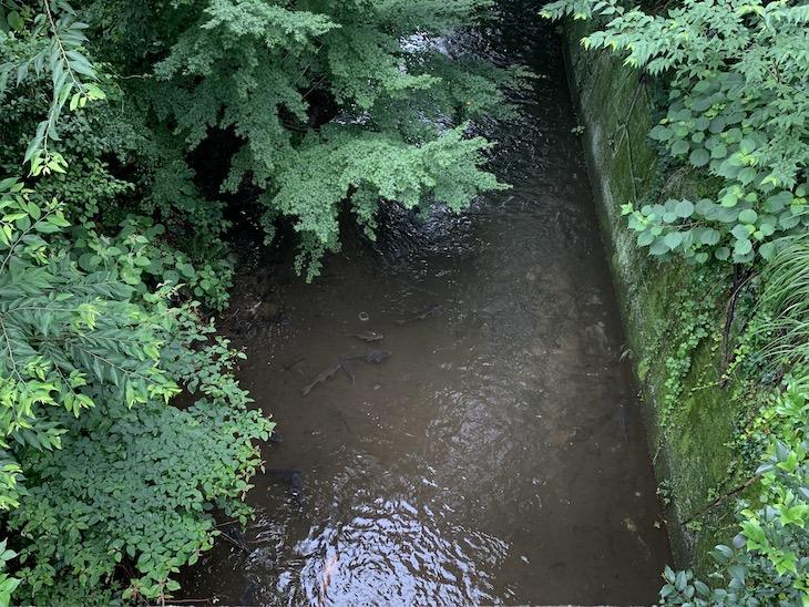 雨続きだったのに水が透き通って魚が泳いでいるのが見えるくらい!