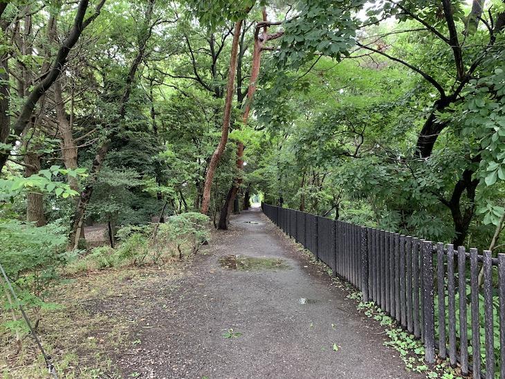 川沿いには緑道もあって、ジョギングしてる人も多いんです。